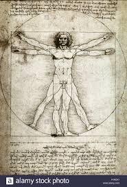 leonardo da vinci sketches anatomy image collections human
