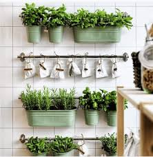 indoor winter garden guide to growing vegetables during cold season