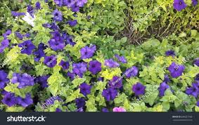 beautiful colour ful flowers stock photo 698227768 shutterstock