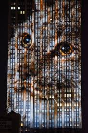 Empire State Building Halloween Light Show Cecil The Lion And 160 Endangered Animals Projected On Empire