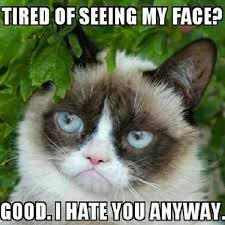 Tired Cat Meme - 20 laughable angry cat meme sayingimages com