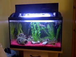 fish tank aquarium fish forale used in floridaaquarium ebay