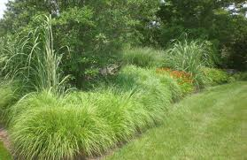 ornament types of ornamental grasses for landscaping wondrous