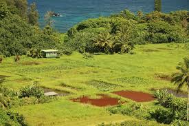 Iao Valley State Park Map by Visit Keanae Peninsula Take Hana Tours To Keanae Maui