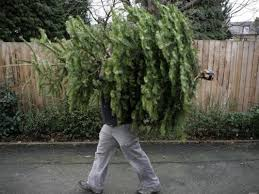 Christmas Tree Pick Up How To Dispose Of Your Christmas Tree Wtsp Com