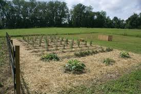 Best Soil For Vegetable Garden In Raised Bed by Preparing And Planting The Raised Row Bed Garden Old World