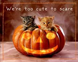 happy halloween cute images kitten vs halloween bowl video love meow