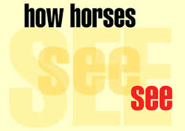 Are Horses Color Blind Horsewyse U2013how Horses See