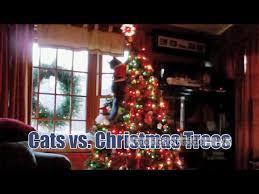 the seasonal war between cats and christmas trees starts again