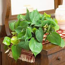 20 super easy houseplants you u0027ll love midwest living