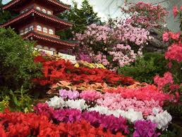 flower flowers garden spring colourful nature japanese just flores