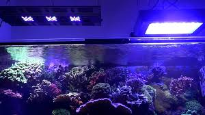 led reef lighting reviews pit s reef tank light update maxspect razor chinese 120w led