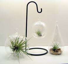 Air Plant Wall Holder Home Decoration Attractive Hanging Air Plant Terrarium In Sphere
