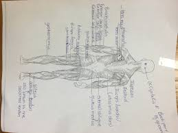 anatomy mrs zedan u0027s science
