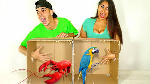 Challenge Lil Moco What S In The Box Challenge Live Animals Wrong