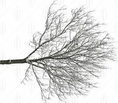 25 big snowy trees vbcp s sea snow0000 big 00 00 00 0 all
