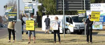 lexus hatfield opening hours circus in hatfield sparks protest rekord east