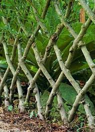 Living Trellis Structure Vivante Nigel And Willow Fence
