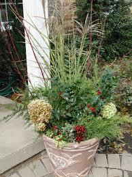 woody plants in pots garden housecalls