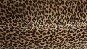 cheetah bedroom ideas best 25 leopard print bedroom ideas on pinterest cheetah room with