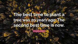 best time to plant the best time to plant a tree getmotivated the