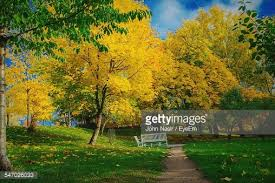Benches In Park - yellow park bench stock photo getty images
