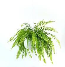 plantes dépolluantes chambre à coucher plantes depolluantes chambre pothos mini plantes depolluantes