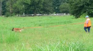 belgian sheepdog club of america national specialty events u0026 club activities ohio valley belgian tervuren club