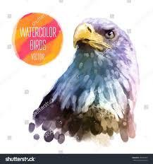 eagle watercolor bird isolated on white stock vector 296485490