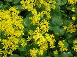 pennsylvania native plants list native groundcovers backyardsfornature org
