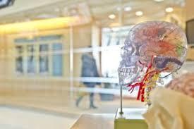 Learning Anatomy And Physiology Free Online Stonebridge Anatomy U0026 Physiology Courses