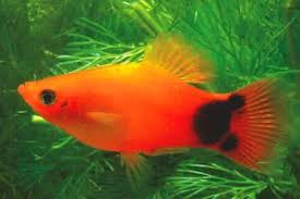 the best fish for a 10 gallon tank