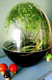 113 best closed container terrariums images on pinterest