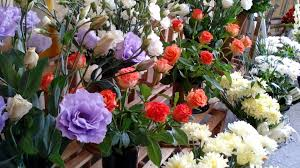 flower shop free photo flower shop flower colorful free image on