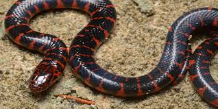 black snake wallpapers group 78