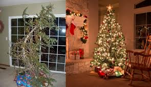 choosing the best real christmas tree leading news