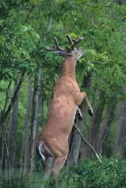 Reflective Deer Blind 8 Best Hunting Gadgets Images On Pinterest Deer Hunting Gadgets