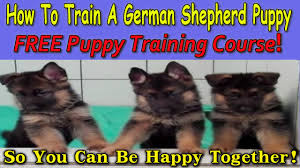 how to train a german shepherd puppy download now free