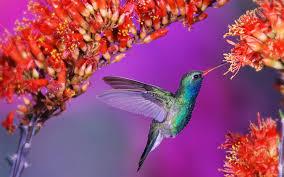Flower And Bird - flower birds