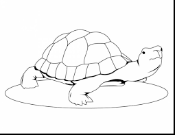 magnificent painted turtle coloring page with turtle coloring page