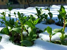 Winter Root Vegetables List - your january gardening check list don u0027t let those trees and