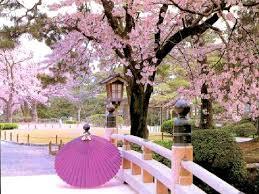 beautiful trees in japan
