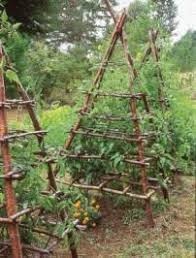 What Vegetables Need A Trellis Gardening On A Trellis Fruit Trees Yards And Plants