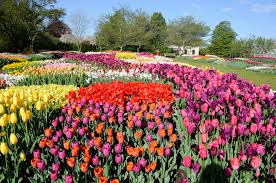 gorgeous spring flowers to brighten your day spring flowers in bloom