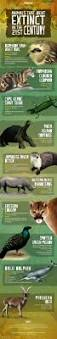 best 25 extinction of species ideas on pinterest species