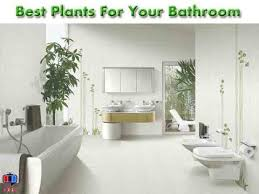 Best Plants For Bathroom Best Plants For Bathroom And Their Benefits Youtube