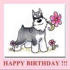 dog birthday meme birthday dog on pinterest dog bandana