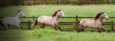 amazon com horses pet supplies blankets u0026 sheets boots u0026 wraps