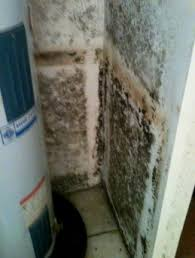 a water heater leak can cause mold how to deal with mold