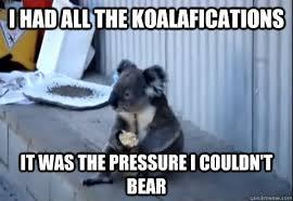 Koala Bear Meme - i had all the koalafications it was the pressure i couldn t bear